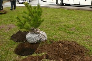 В районе Зябликово предлагают провести комплексное озеленение