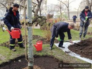 Ирга, багряник японский и клены появятся на Садовом кольце после реконструкции
