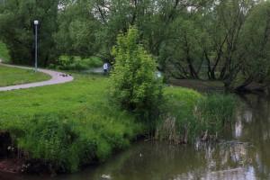В пойме реки Городни ликвидируют сухостойные деревья