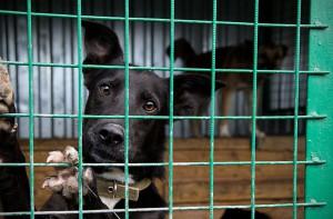 Местные жители смогут принести корм и лекарства для бездомных животных
