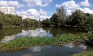 Река Городня после ливня