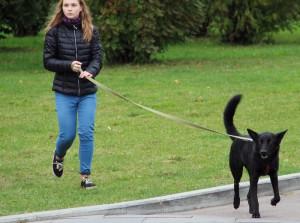 В Зябликове обновили площадку для выгула собак