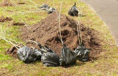 В 15 дворах в Зябликове этой осенью проведут комплексное озеленение