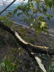 В ходе замены асфальта в Ореховом проезде было повреждено дерево