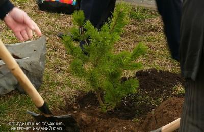 Работы по озеленению в Южном округе