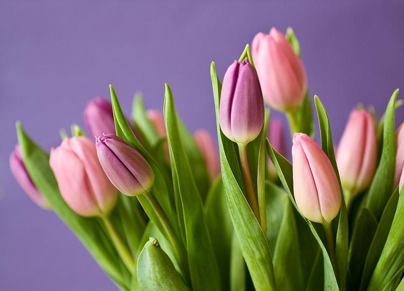 тюльпаны, 800, Зябликово, фото к новости на 5 марта
