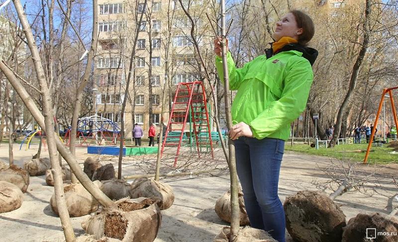 озеленение, дерево, мосру, 0304