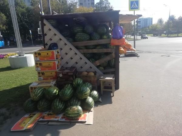 бахчевой развал, Шариддин Исматуиллов, арбуз, дыня, шипиловская, 0509 (4)