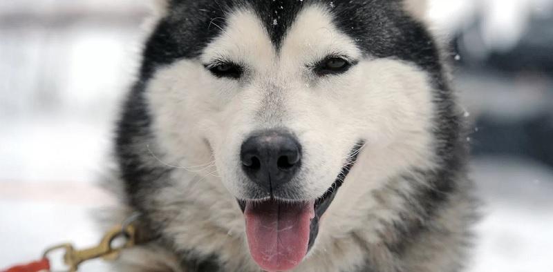 собака, зима, мосру, 2401